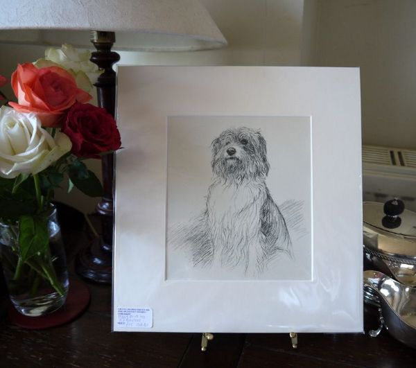 Bearded Collie - Col B1 -1930's print by K F Barker